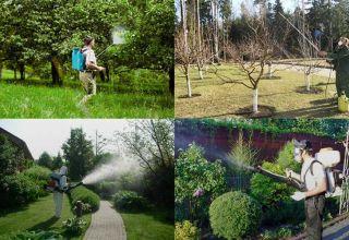 Правила опрыскивания деревьев