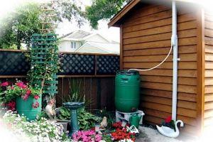 Дождевая вода на даче: как собирать и где использовать